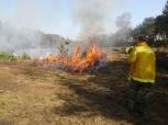 Heidebranden in het Brachter Wald