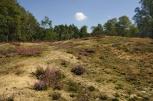 Brachter Wald: Tor am weißen Stein wieder geöffnet